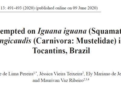 Predation attempted on Iguana iguana by lontra longicaudis